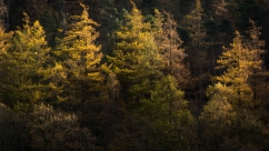 Yew Tree Tarn, Lake District