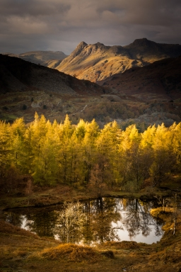Holme Fell, Lake District