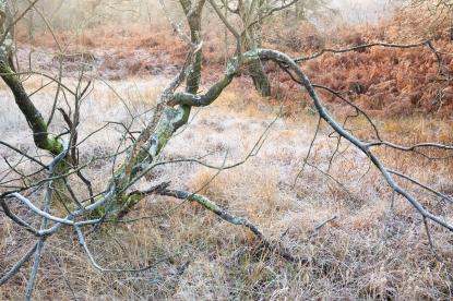 Near Hodge Close, Lake District